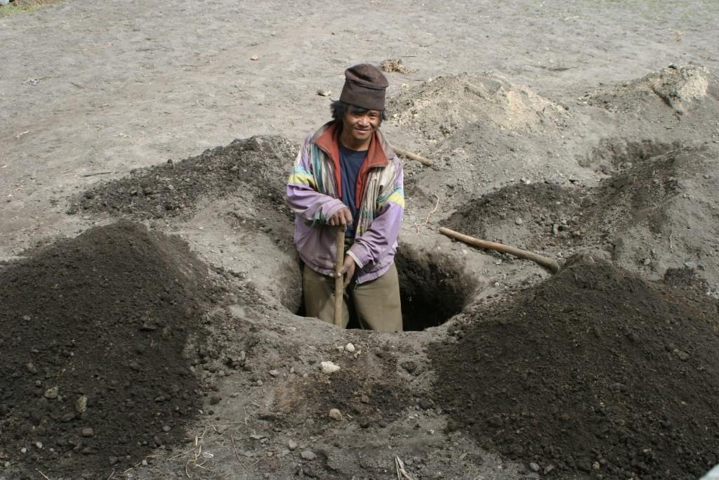 Digging potato holes
