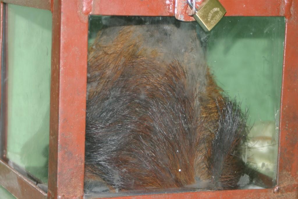 Yeti scalp