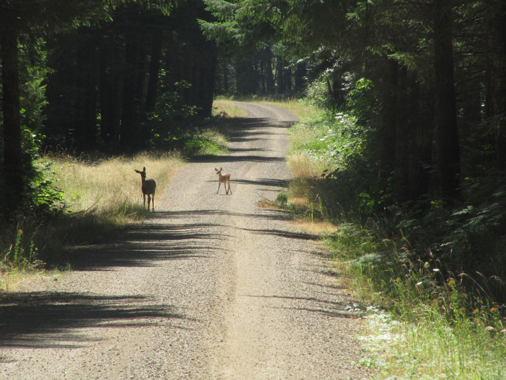 Deer grazing on the trail