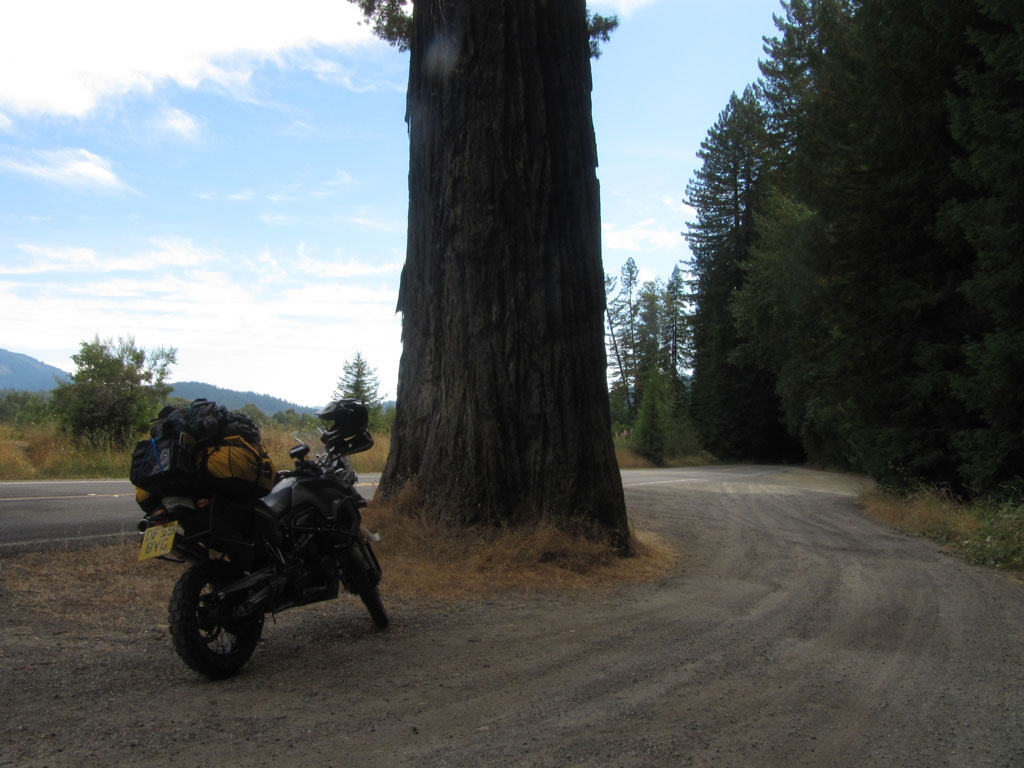 My bike and a redwood