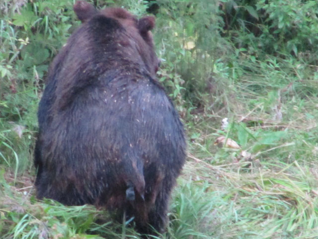 Positive proof – bears sh*t where they bloody well like...