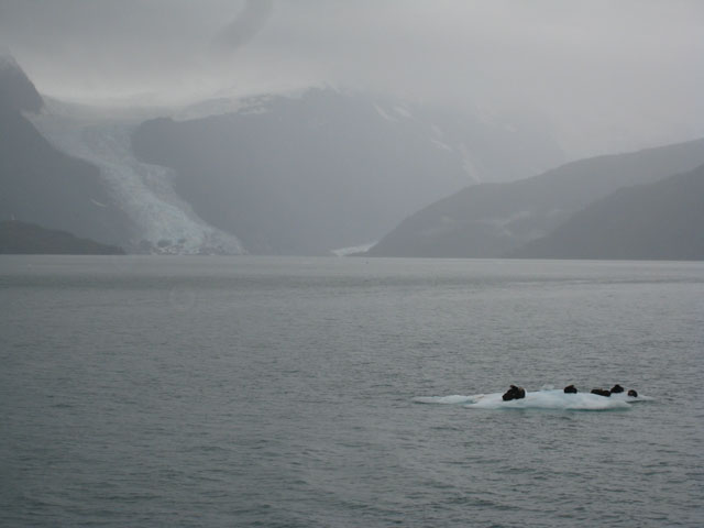 Looking back up the sound to the glaciers at the head