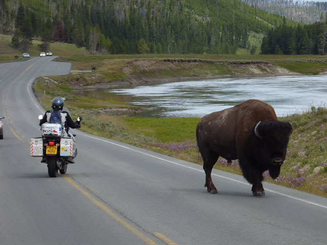 Paul gives the bison some room...