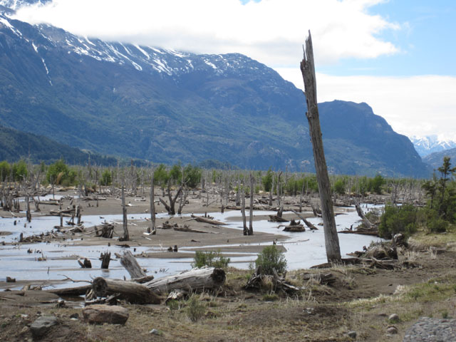 Dead forest, Patagonia...