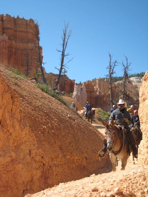 Encountering horseback riders on the narrow paths high in Bryce Canyon